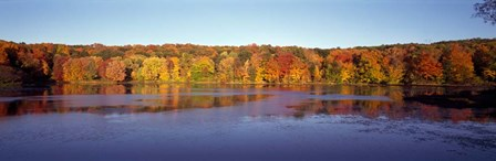 Reflection of Trees and Plants in Water, Bergen County, New Jersey by Panoramic Images art print