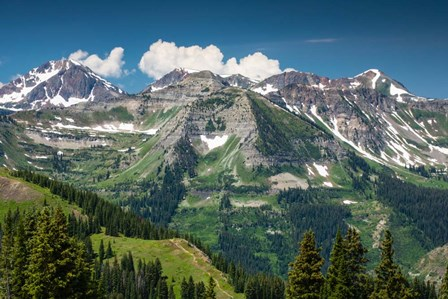 Trees on a Mountain, Crested Butte, Colorado by Panoramic Images art print