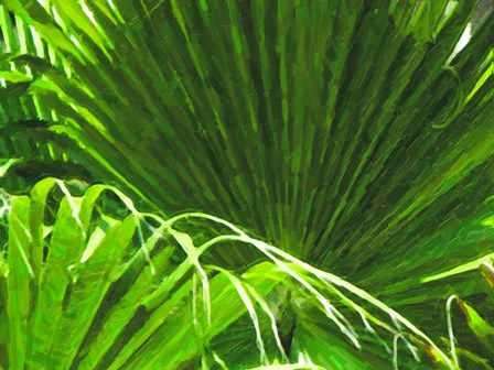 Painted Ferns II by Graffi*tee Studios art print