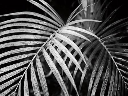 Palm Fronds by Debra Van Swearingen art print