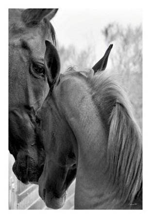 Cheers n' Foal by Barry Hart art print