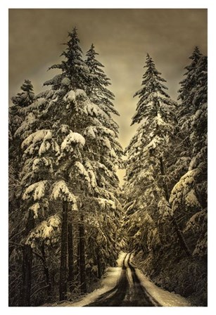 Wagner Creek Snow by David Lorenz Winston art print
