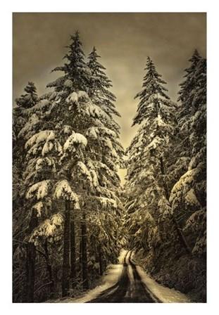Wagner Creek Snow by David Lorenz Winston art print