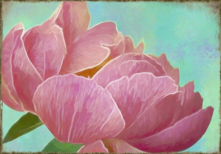 Pink Peony by Cora Niele art print