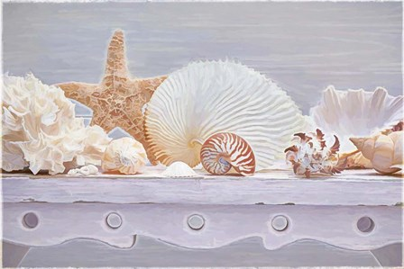 Sea Shell Still Life by Cora Niele art print