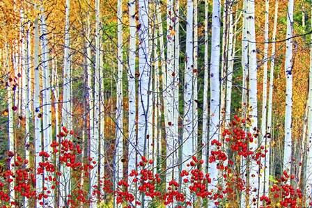 Fall Season 2 by Ata Alishahi art print