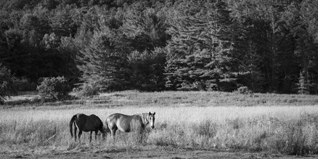 Two Horses by Brenda Petrella Photography LLC art print