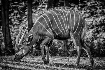 The Deer - Black & White by Duncan art print