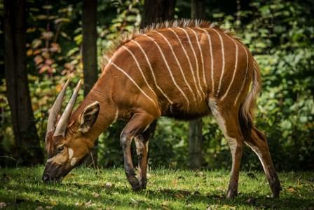 The Deer by Duncan art print
