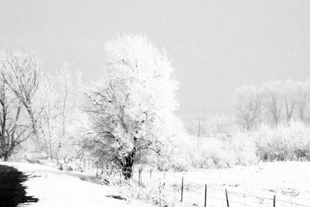 Winter Scene by Jennifer Pugh art print
