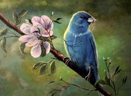 Blue Finch by Greg Farrugia art print
