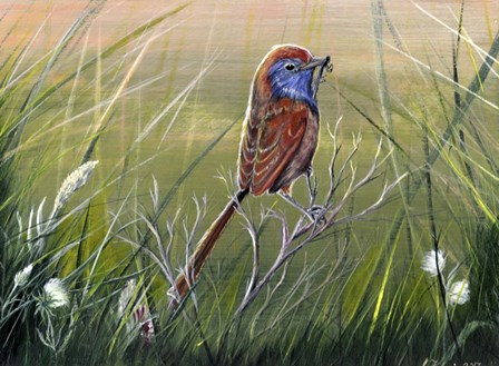 Emu Wren by Greg Farrugia art print