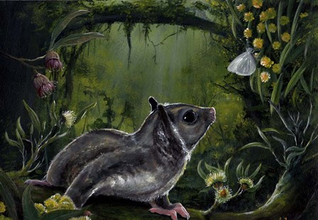 Sugar Glider by Greg Farrugia art print