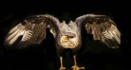 Wings by Duncan art print