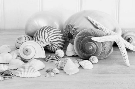 Collection of Shells BW by Tom Quartermaine art print