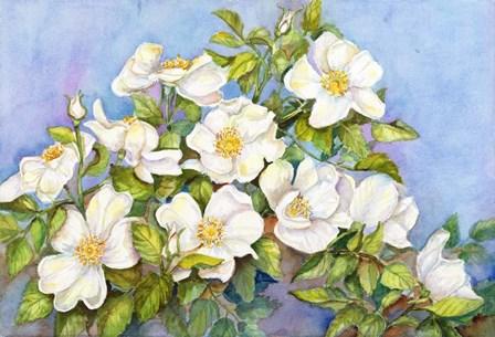 White Roses by Joanne Porter art print