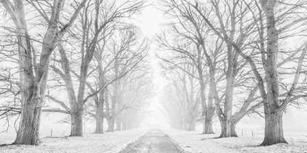 Tree Lined Road in the Snow by Pangea Images art print