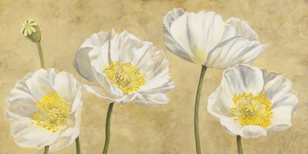 Poppies on Gold by Luca Villa art print