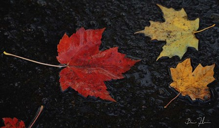Leaves of Color by 5fishcreative art print