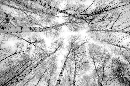 Through The Birch Trees by 5fishcreative art print