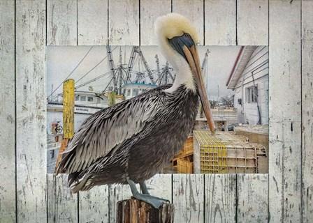 Pelican Pride by Steve Hunziker art print