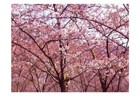 Blossom Pink Trees 2 by Stephanie Frances art print