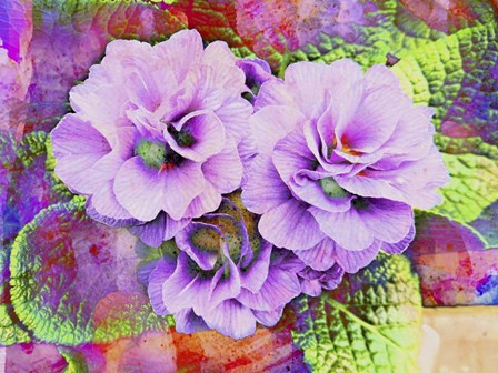 Primula Lilac Fantasy by Dorothy Berry-Lound art print