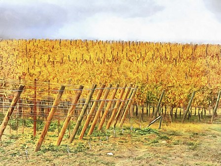 Grape Vines In Autumn by Dorothy Berry-Lound art print