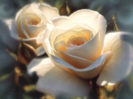 White Roses - Colors of White by Collin Bogle art print