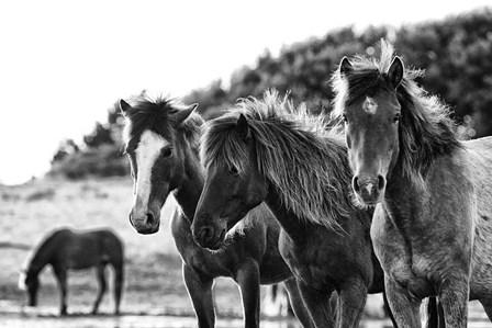 Horses Three by Aledanda art print