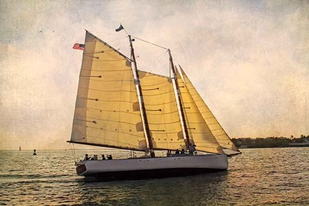 Morning Sail by Debra Van Swearingen art print