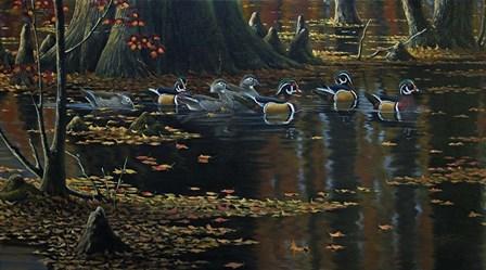 Cypress Jewels - Wood Ducks by Wilhelm J. Goebel art print