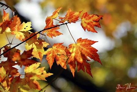 Fall Colors by 5fishcreative art print