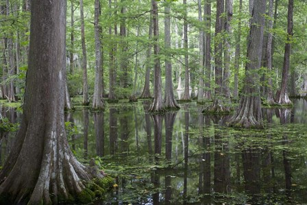 In the Swamp by Images in Nature art print